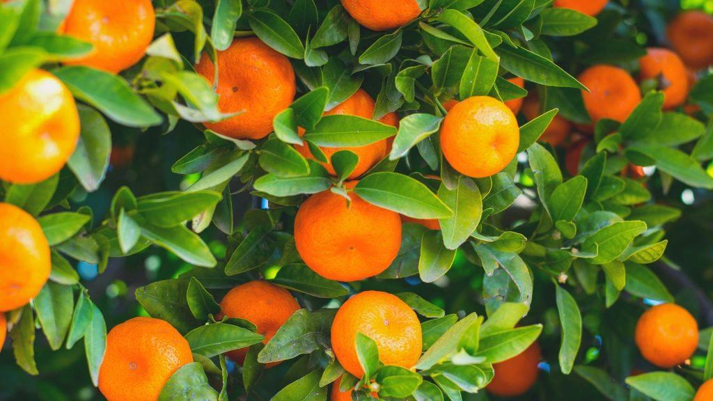 Dampak Kelebihan Vitamin C Bagi Kesehatan